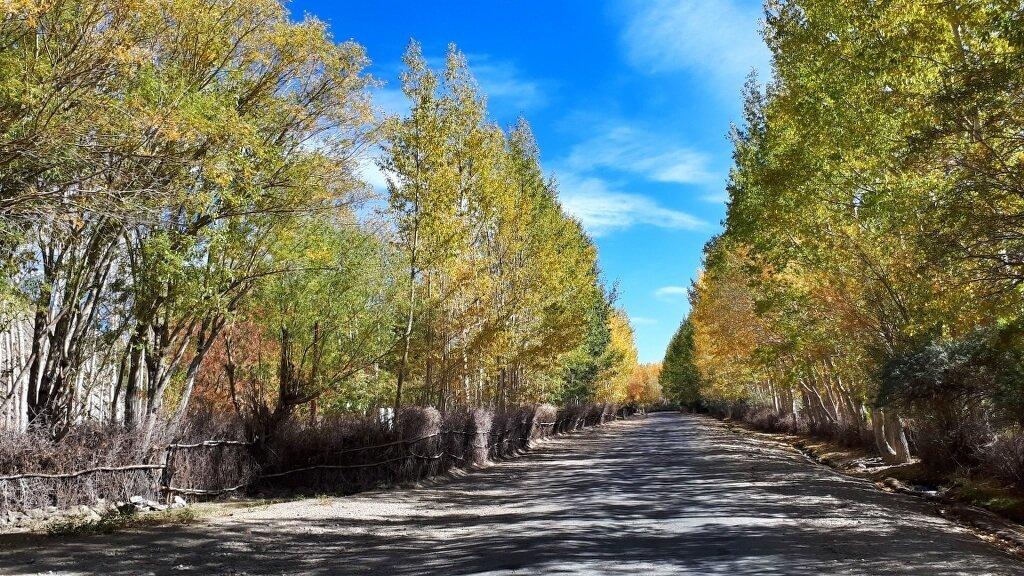 Autumn Trees Wakhan Tajikistan